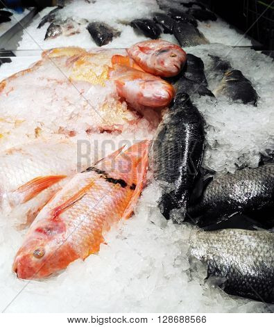 Fresh Nile Tilapia from cultured in Thailand