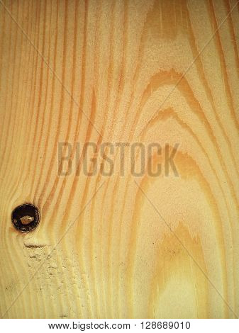 Wood gnarl textured background with natural wood pattern