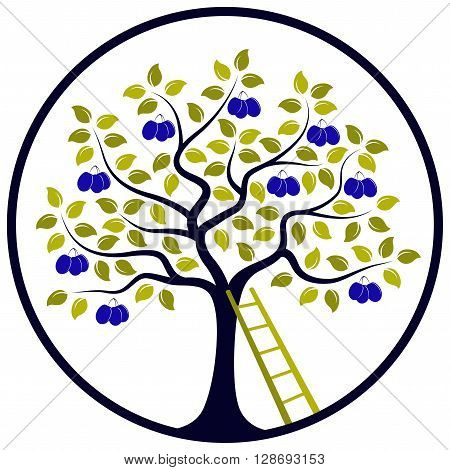 vector plum tree and ladder in round isolated on white background