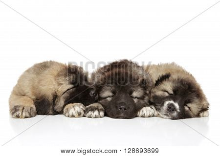 Caucasian Shepherd Puppies On White