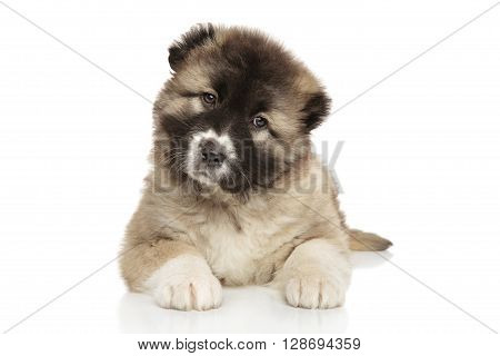 Caucasian Shepherd Puppy On White