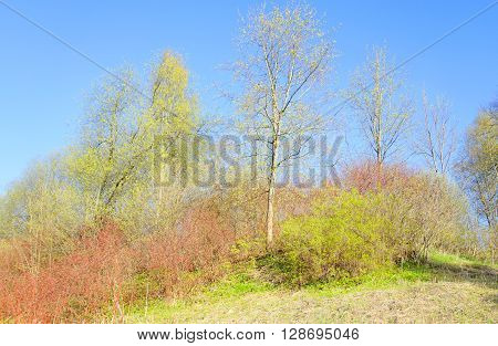 The photo of park at spring sunny day.