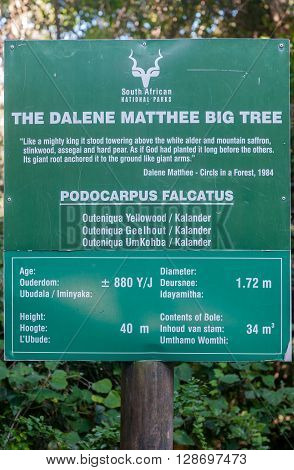 MILLWOOD SOUTH AFRICA - MARCH 4 2016: Sign at the Dalene Matthee yellowwood tree in the Knysna Forest. Dalene Matthee was a renowned South African author