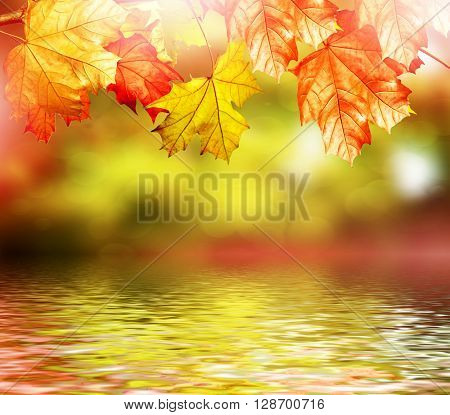 Autumn foliage. Golden Autumn. Photo. colorful autumn foliage.