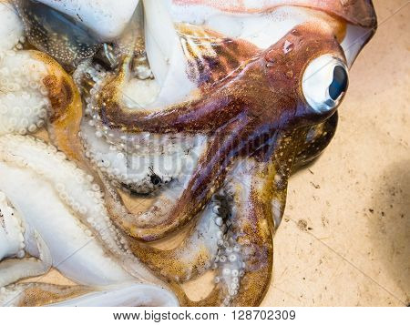Detail of some freshly caught cuttlefish exposed in a market stall