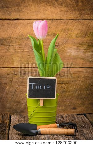 Single potted tulip with a chalk board sign.