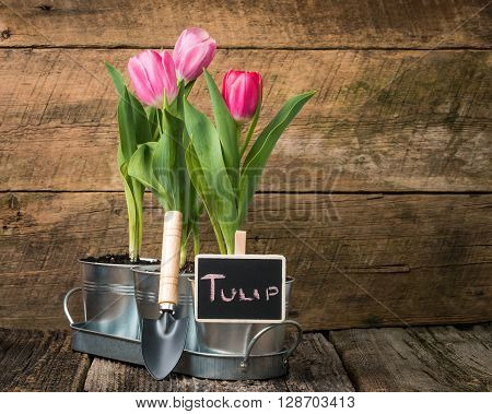 Planter with pink tulips and a small chalk board sign.