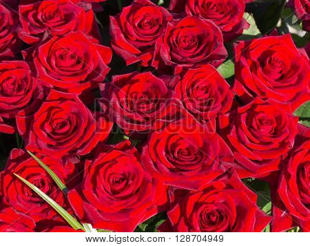 bright cherry red rose with green leaves in a big beautiful bouquet top view