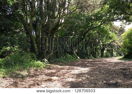 Shaded path under the lush green trees inside of the Cerro Verde National park El Salvador