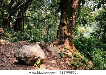 Forest in the mountains of Juayua Ruta de las Flores itinerary El salvador