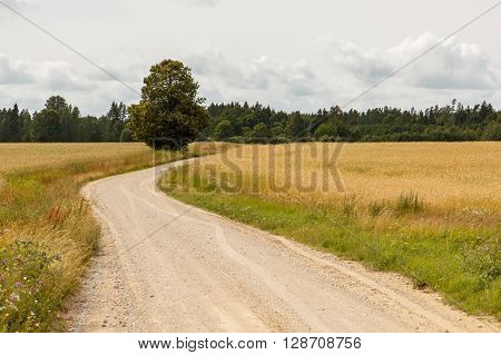 A gravel countryside road going trough a field