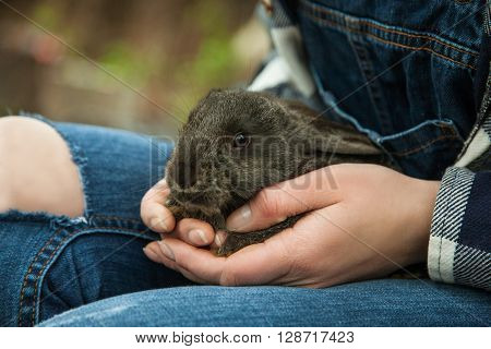A Small Bunny Sitting On A Young Girls Lap