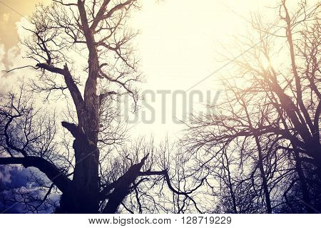 Old dead trees over sky. Nature concept. Vintage retro colors picture.