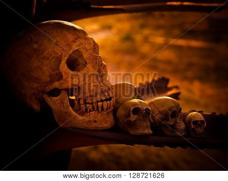 Still life with human skull on dried wood