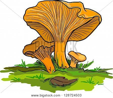 Mushrooms, grass, leaves, in the woods,  nature