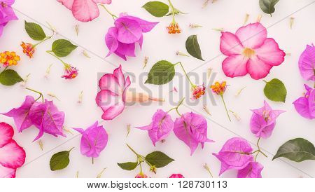 Flower background - op view of pink flowers and leaves