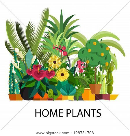 Vector Set of indoor plants in pots. Illustration of floor trees homeplants for interior. Plants for home decoration. Potted tree homeplants and flowers. Big floor homeplants tree set.