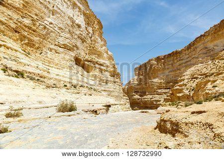 Canyon Ein Avdat in the Negev desert