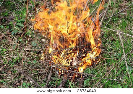 The fire which ignited in the forest. A fire made of dry twigs on the green grass.