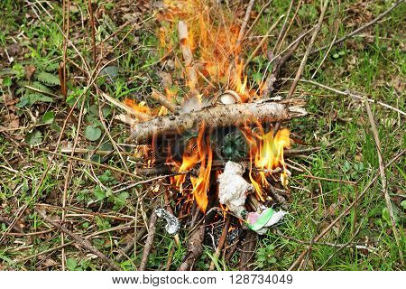 A fire in the woods. Kindled a fire with dry twigs and sticks on the green grass. In a fire burns collected in forest litter.