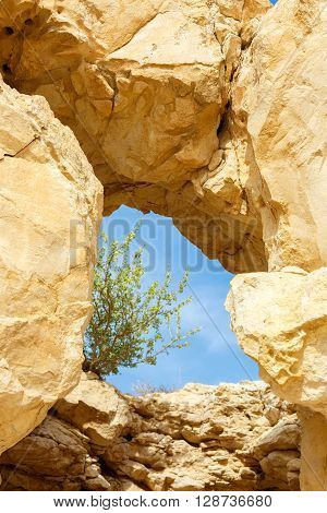 A natural window in a rock through which one can see the sky and the tree