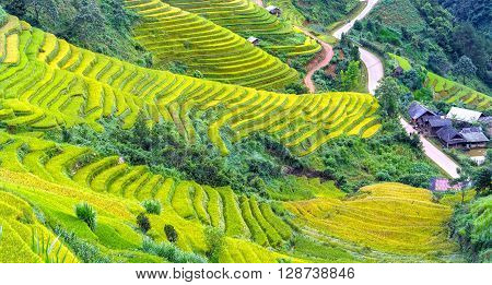 Beauty hillside terraces Mu Cang Chai with covered grade rice fields surrounding hills, below home to create focal points, where recognized as a national scenic spots in Yen Bai, Vietnam