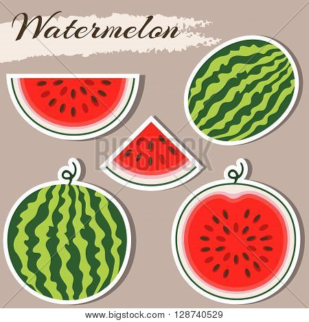 Set of fresh ripe watermelon. Single watermelon half a watermelon a slice of watermelon. Summer concept. Watermelon vector illustration. Sticker watermelon