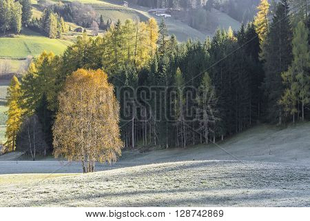 Autumn Landscape With Trees And Mountain
