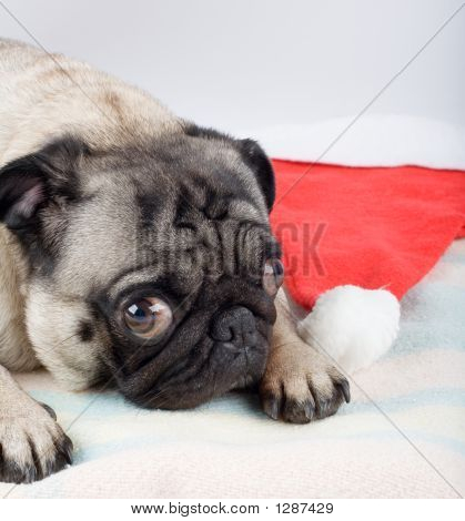 Pug Lying On A Blanket With Santa Hat