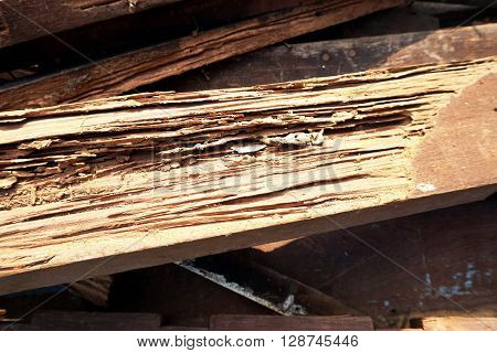 Wood decay happening from termites eat for a long time