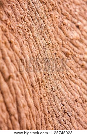 Close up of a wild African elephants skin texture
