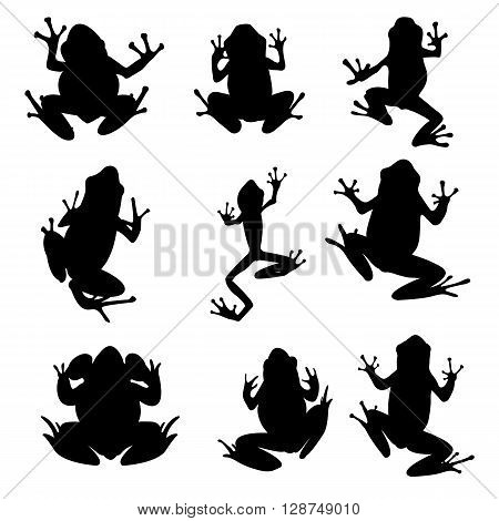 Vector amphibian silhouette on the white background. Frog silhouettes. Collection of vector amphibian silhouette isolated. Vector silhouettes of amphibian top view