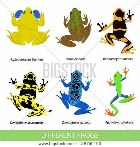 Set of different frogs flat design. Vector illustration of frogs on a white background. Poisonous frog. Frog pond. Set of isolated frogs. Frog clip-art. Frog water and frog tree