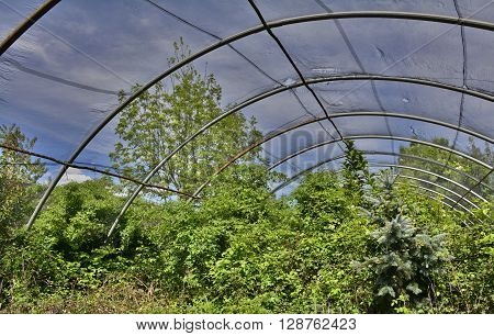 Abandoned greenhouses which have been out of use for many years