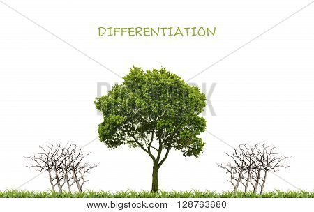 business differentiation concept with one green tree