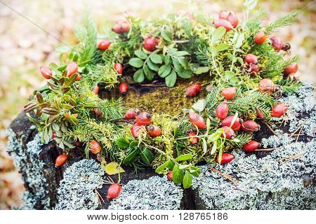 wreath of wild rose and tree branches on the moss in autumn forest