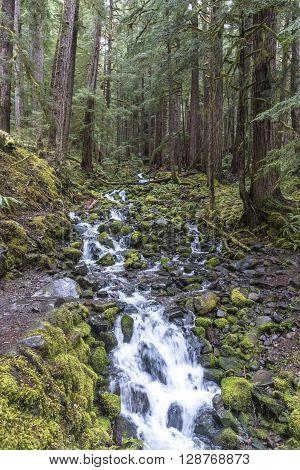 Fresh mountain stream in Washington's Olympic Mountains