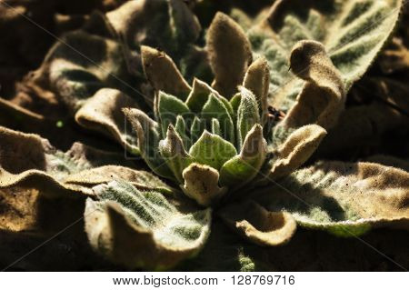 Strange plant in bright light. Desert fauna