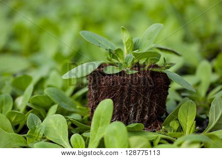 young plant new life , Green sapling Ecology World Environment Day CSR Seedling Go Green Eco Friendly Earth Health Care Food Garden New Life concept