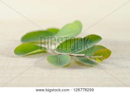 Moringa (Other names are Moringa oleifera Lam. MORINGACEAE Futaba kom hammer vegetable hum hum bug bug Hoo) leaf on wooden board background