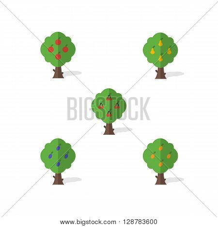 Garden trees. A set of garden trees in the flat design. Apple, pear, cherry, plum and apricot on a white background. Modern flat collection - stock vector