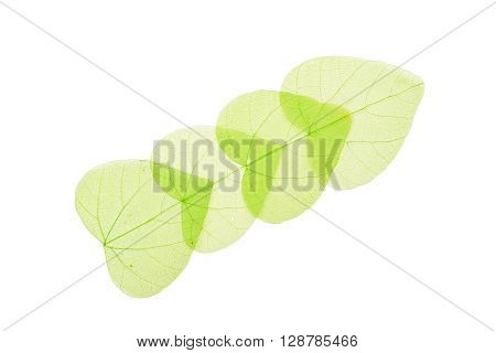 Four Green Heart Shaped Skeleton Leaves On White