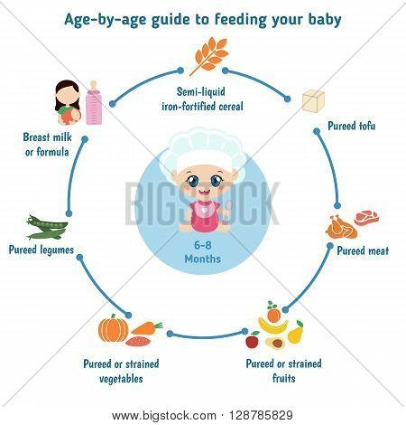 Baby child infographic presentation template with baby food. Age - by- age guide to feeding your baby: 6-8 Months.