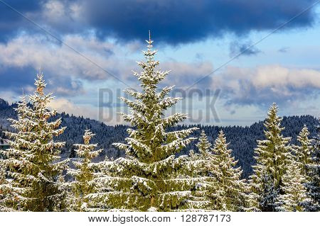 Winter Trees In Mountains Covered With Fresh Snow. Beautiful Winter Landscape With Snow Covered Firs