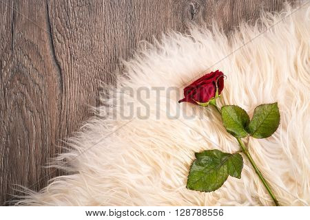 one red rose on sheep's clothing on wood background