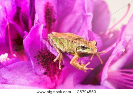 Close up of frog facing forward on wild flowers during bright daylight. Light effect applied to image. Selective focus on eye and nose.