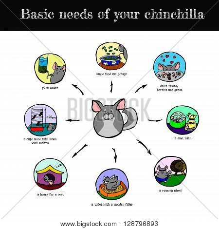 A visual and colorful scheme of basic chinchilla's needs hand drawn vector illustration.