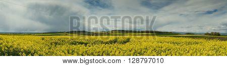 Panorama of a canola field at Hohe Strasse Wetterau Hesse Germany