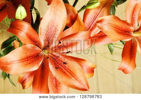 Photo of a Bouquet of blooming Lilium Flowers.
