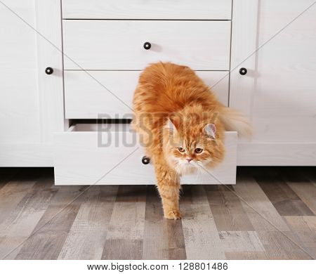 Cute ginger cat in chest of drawers